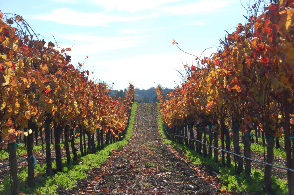 fab fall getaways - southern california travel guide -San Luis Obispo