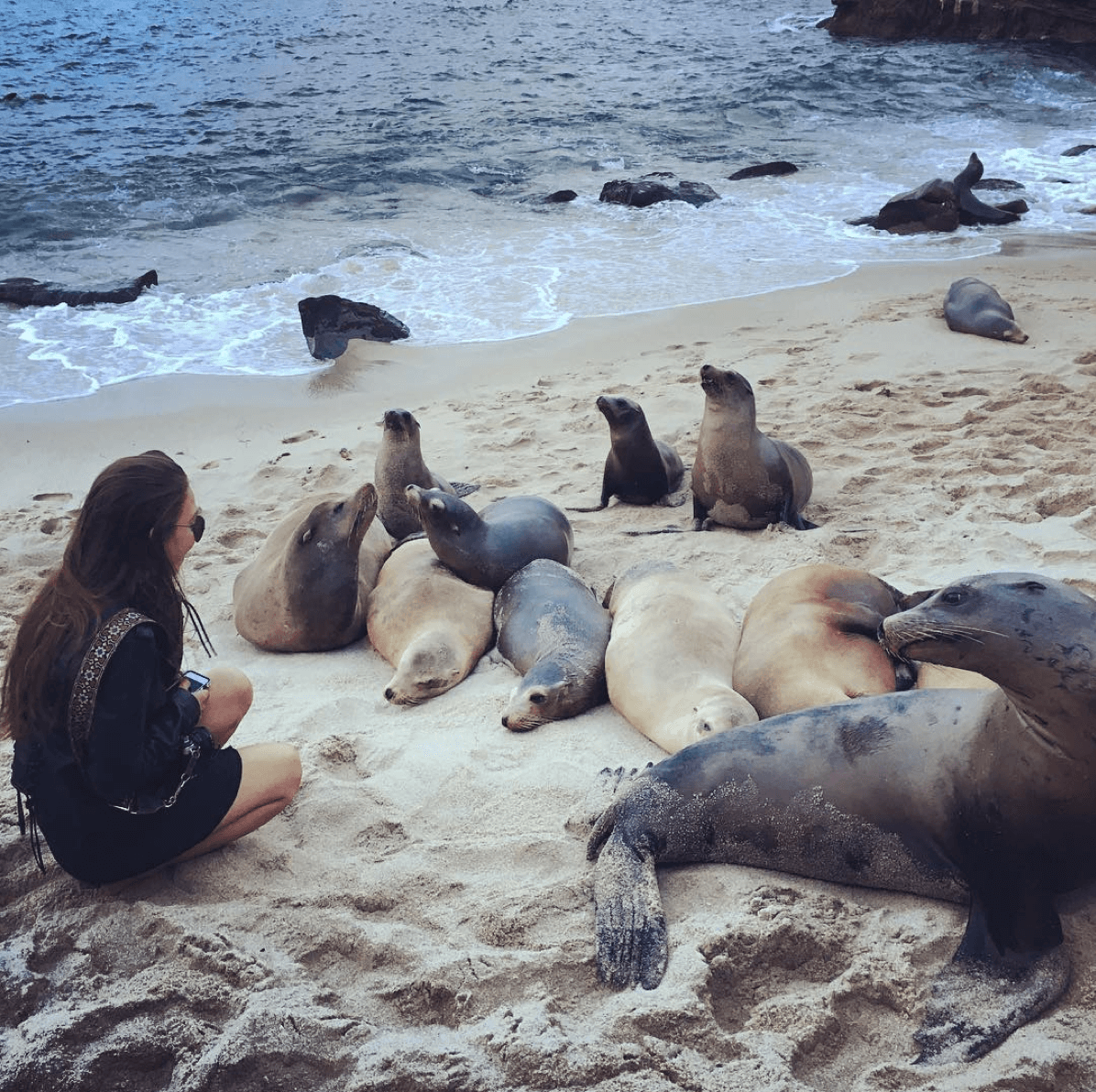 the seals at la jolla cove